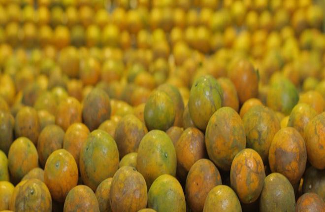 การคัดคุณภาพส้ม