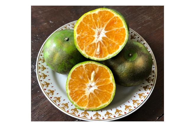 ส้มสายน้ำผึ้งผิวลายคละไซส์(#3,#4) ส้มนอกฤดู